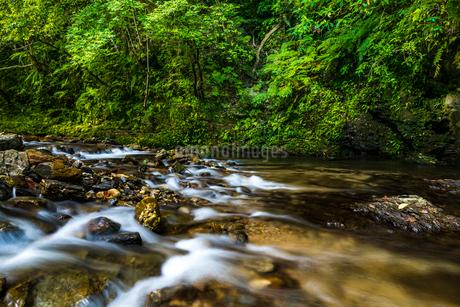 やんばるの川の写真素材 [FYI02680264]