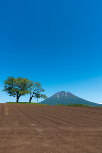 ニセコのサクランボの木と羊蹄山の写真素材 [FYI02680276]