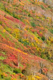銀泉台第一花園付近の紅葉の写真素材 [FYI02680283]