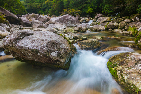 屋久島 横河渓谷の写真素材 [FYI02680285]