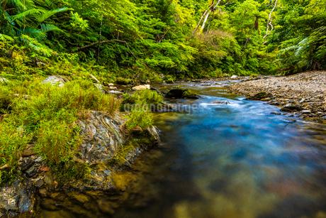 やんばるの川の写真素材 [FYI02680292]