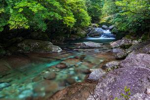 屋久島 白谷雲水峡の写真素材 [FYI02680293]