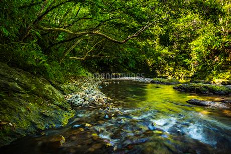 やんばるの川の写真素材 [FYI02680298]