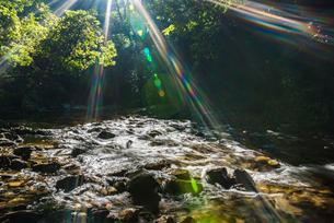 やんばるの川の写真素材 [FYI02680312]