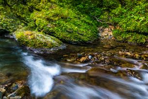やんばるの川の写真素材 [FYI02680317]
