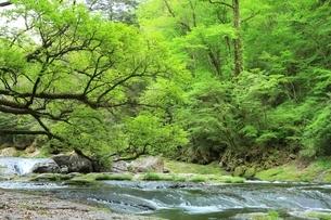 新緑の菊池渓谷の写真素材 [FYI02680326]