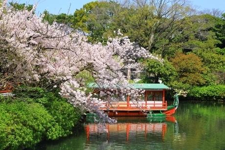 神泉苑 龍頭船と桜の写真素材 [FYI02680402]