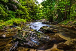 やんばるの川の写真素材 [FYI02680420]
