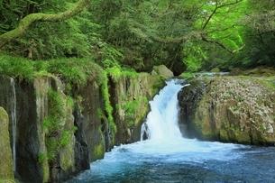 新緑の菊池渓谷の写真素材 [FYI02680493]