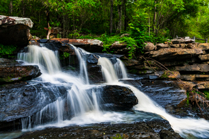 Tadnoi Waterfall, Thailandの写真素材 [FYI02680498]