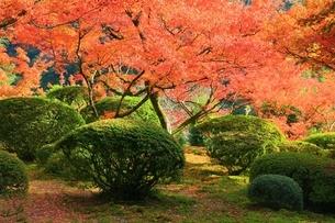 秋の九年庵の写真素材 [FYI02680537]