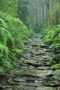 熊野古道 馬越峠道の写真素材 [FYI02680538]