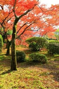 秋の九年庵の写真素材 [FYI02680545]