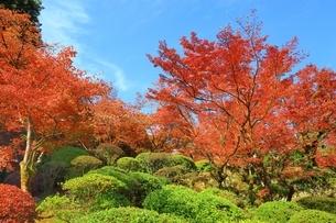 秋の九年庵の写真素材 [FYI02680551]