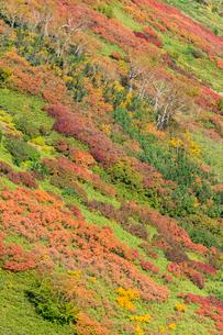 銀泉台第一花園付近の紅葉の写真素材 [FYI02680552]