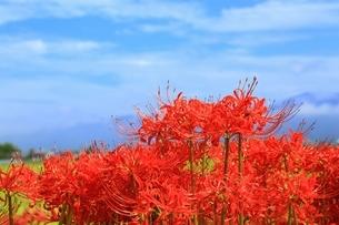 京都 ひがん花の里の写真素材 [FYI02680572]