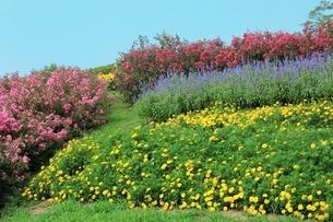 馬見丘陵公園 夏の花々の写真素材 [FYI02680587]