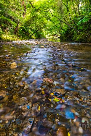 やんばるの川の写真素材 [FYI02680595]