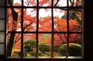 秋の九年庵の写真素材 [FYI02680635]