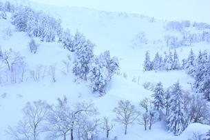 十勝岳温泉から望む樹氷林の写真素材 [FYI02680646]