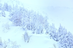 十勝岳温泉から望む樹氷林の写真素材 [FYI02680648]