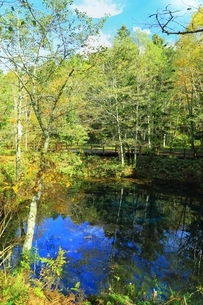 秋の神の子池の写真素材 [FYI02680696]