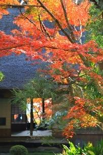 秋の九年庵の写真素材 [FYI02680697]