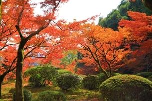 秋の九年庵の写真素材 [FYI02680704]
