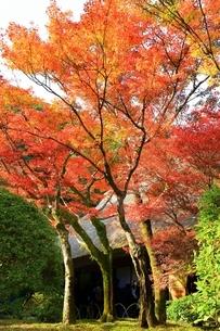 秋の九年庵の写真素材 [FYI02680705]