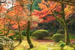 秋の九年庵の写真素材 [FYI02680714]