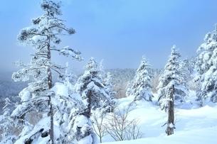 十勝岳温泉から望む樹氷林の写真素材 [FYI02680755]