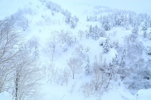 十勝岳温泉から望む樹氷林の写真素材 [FYI02680785]