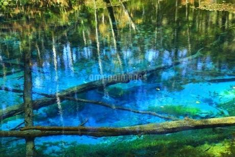 秋の神の子池の写真素材 [FYI02680797]