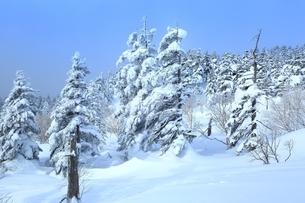 十勝岳温泉から望む樹氷林の写真素材 [FYI02680798]