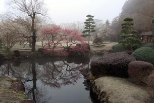 霧の偕楽園の写真素材 [FYI02680800]