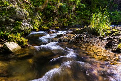 やんばるの川の写真素材 [FYI02680812]