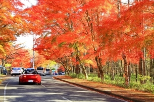 北杜八ケ岳公園道路の紅葉の写真素材 [FYI02680816]