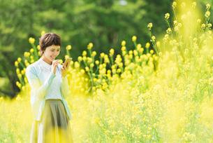 菜の花畑で写真を撮る若い女性の写真素材 [FYI02680838]