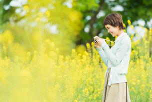 菜の花畑で写真を撮る若い女性の写真素材 [FYI02680850]