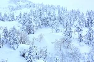 十勝岳温泉から望む樹氷林の写真素材 [FYI02680856]