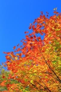 美留和の森と紅葉の写真素材 [FYI02680860]