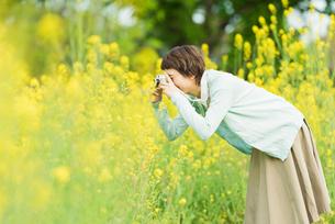 菜の花畑で写真を撮る若い女性の写真素材 [FYI02680923]