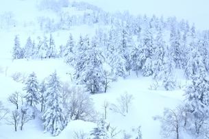 十勝岳温泉から望む樹氷林の写真素材 [FYI02680933]