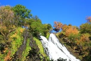 オシンコシンの滝と紅葉の写真素材 [FYI02680970]