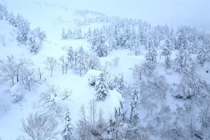 十勝岳温泉から望む樹氷林の写真素材 [FYI02680972]