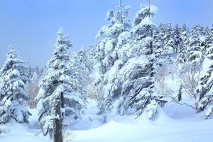 十勝岳温泉から望む樹氷林の写真素材 [FYI02680982]