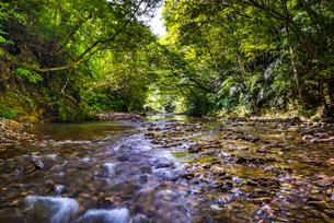 やんばるの川の写真素材 [FYI02680986]
