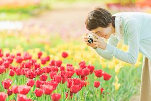 花畑で写真を撮る若い女性の写真素材 [FYI02680990]