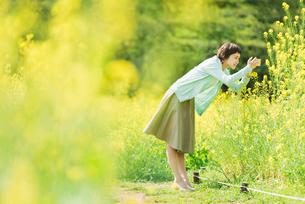 菜の花畑で写真を撮る若い女性の写真素材 [FYI02681009]