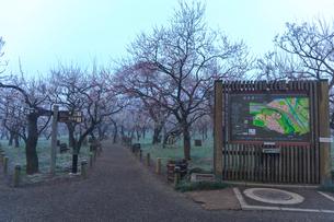 霧の偕楽園の写真素材 [FYI02681036]